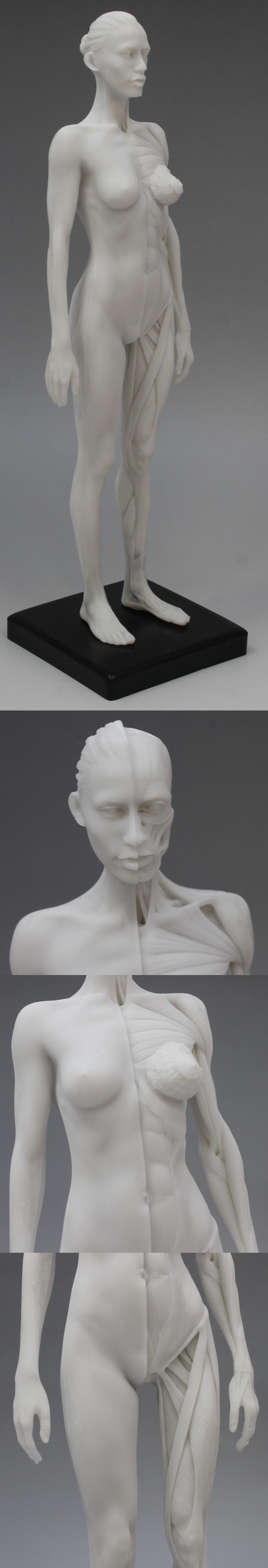 009人体模型5