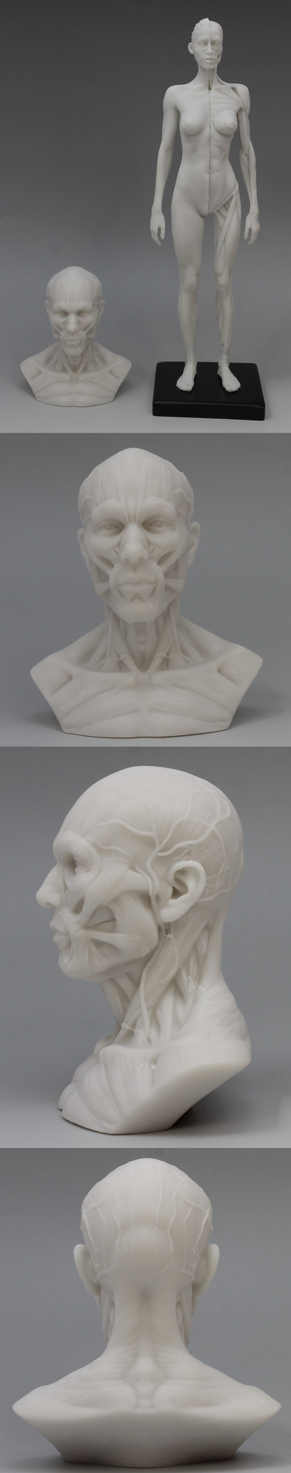 009人体模型1