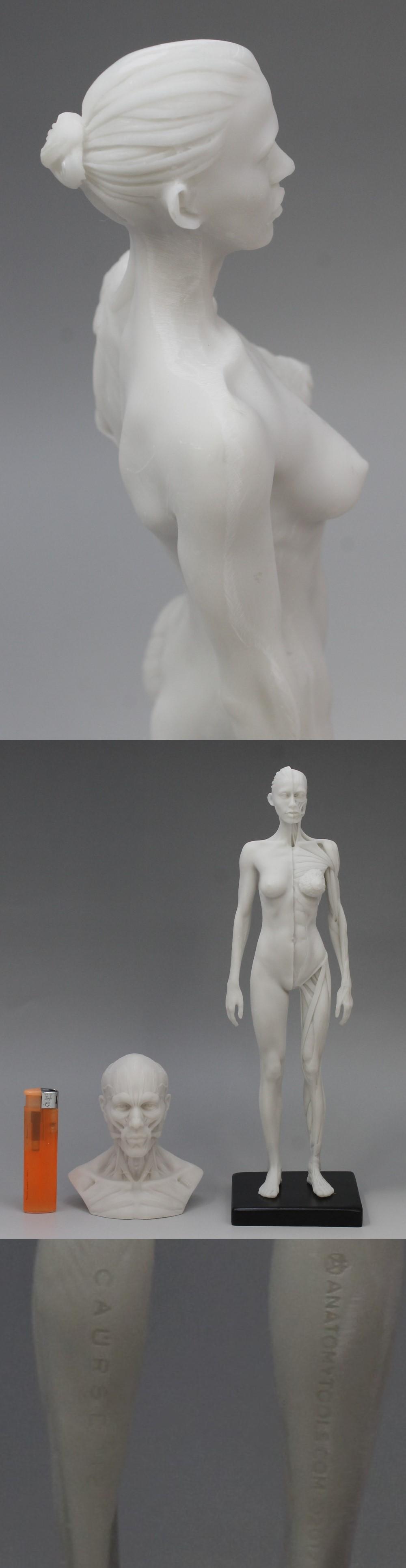009人体模型8
