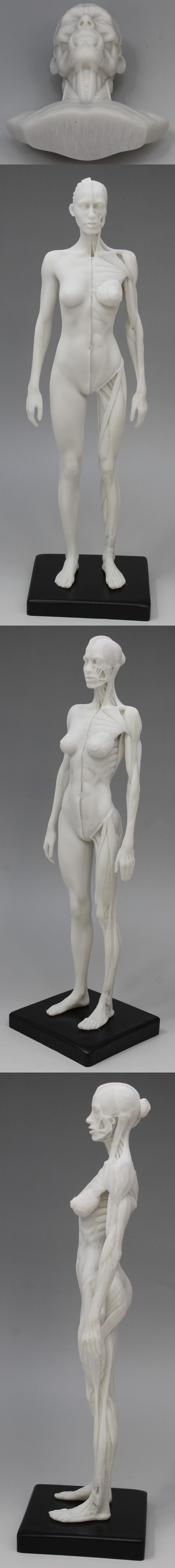 009人体模型3