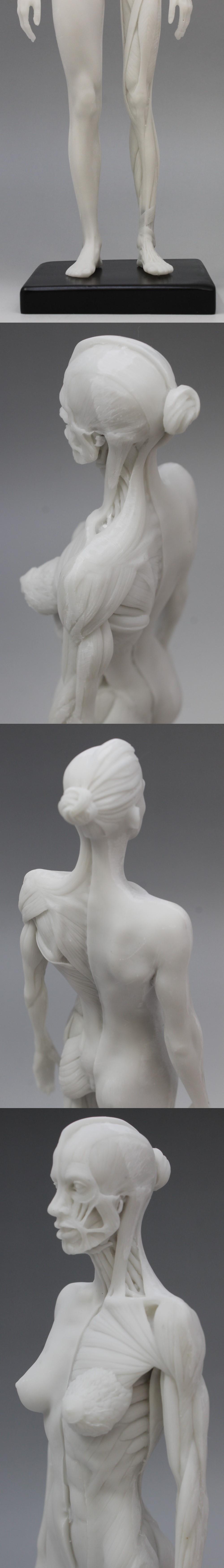 009人体模型6